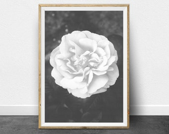 Black and White Print, Rose Print, Printable Art, Black and White Photography, Printable Wall Art, Nature Photography, Antique Print,