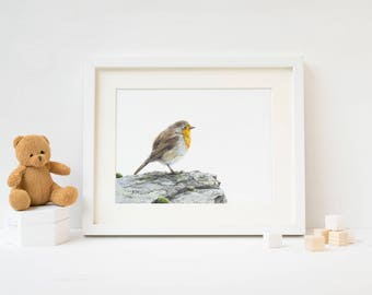 "5x7"" European Robin - British Bird Art Print - Wildlife Nature Art - Robin Print"