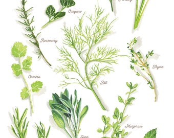 Culinary Herbs Watercolor Illustration Print