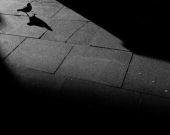 Pigeon street -  fine art monochrome photography