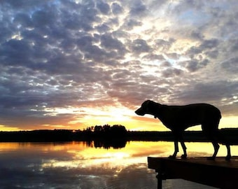Dog Photography Art, 16x20 Canvas, Weimaraner Art, Animal Photography, Gift for Dog Lover, On Point, Sunset