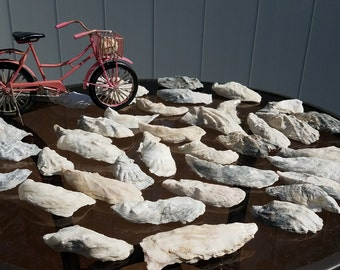 beautiful white deep oyster shells 3-4 inches
