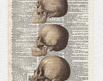 Skulls, William Cheselden Anatomy, art print, dictionary Art, Book Art, wall Decor, Wall Art Mixed Media Collage, Evolution, Gift for