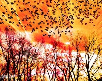 Bird Prints, Bird Art, Nature Prints, Bird Photography, Nature Photography, Nature Photos, Blackbird Print, Nature Photography Prints, Birds