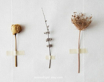 Flora Study N3 - 8x10. Fine Art Photographic Natural History Print. Minimal simple style. Natural Home Decor. Indoor garden botanical