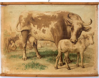Rare educational chart, cow, Lithograph, H. Leutemann, published by Leipziger Schulbilderverlag von F. E. Wachsmuth, 1878