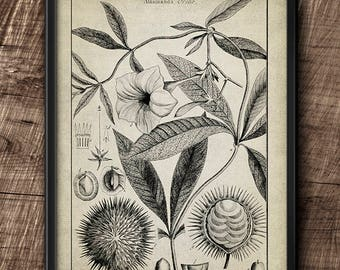 Botanical · 8x10 · Flower · Instant Download · Vintage · Art · Wall · Printable · Digital File #26