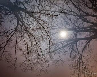 Night Photography, Moon, Full Moon, Supermoon, Tree Photography, Multiple Exposure, Supermoon Photo Print