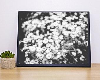 Black And White Wild Flower Art Print