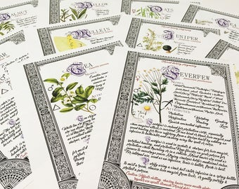 10 Herbarium Bundle #4  - INSTANT DOWNLOAD Book of Shadows Pages : Willow, Cedar, Mullein, Vanilla, and more