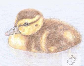 Duckling -  Blank Card