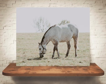 Horse Photograph - Farmhouse Decor - Fine Art Print - Color Photography - Equine Wall Art - Wall Decor -  Horse Pictures - Horses