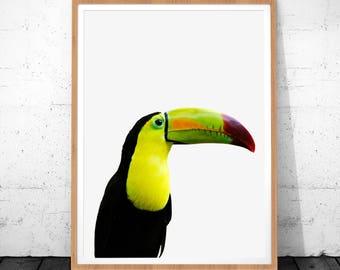 Tropical Bird Print, Toucan Art, Bird Prints, Toucan Bird, Tropical Bird, Tropical Print, Toucan Printable Art, Bird Wall Art, Toucan Art