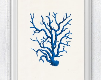 Blue coral - sea life print - Antique sealife Illustration , Marine  sea life illustration A4 print SWC023