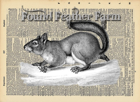 """Vintage Antique Dictionary Page with Antique Print """"Black and White Grey Squirrel Horizontal"""""""