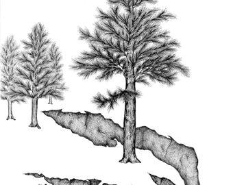 Waiting Pine Print