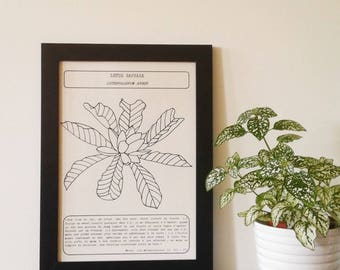 The metamorphosis of Ovid - herbalist Board wild Lotus
