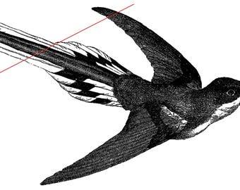 Temporary tattoo - Hummingbird