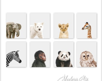 Baby Animal Prints Animal Nursery Decor Safari Nursery Print Set Baby Animal Photography Baby Animal Decor Safari Animal Print Set of 8