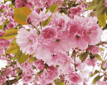 Cherry Tree I - photograph
