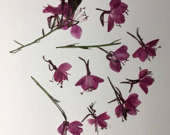 Dried flowers dried flowers pressed flower business gaura creative flowers for tickets