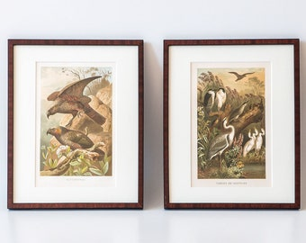 Two antiquarian lithographs in wooden frames, vintage at 1900, parrots and herons, illustration