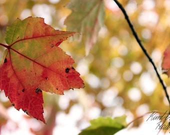 Photography, Nature, Autumn Leaf