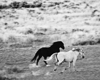 Wild Mustangs of Wyoming in  Black and White  - Wild Horses Fine Art Photography