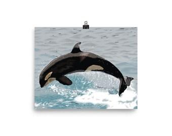 Graceful Orca