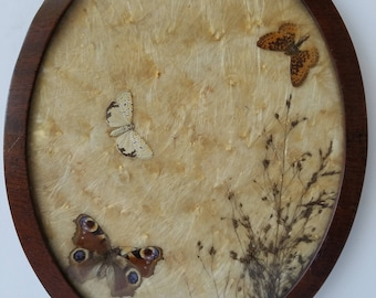 Oval Framed Milkweed Seed with Butterflies Display Piece