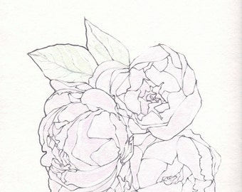 Illustration of Pale Pink Peony Blossoms (Original)