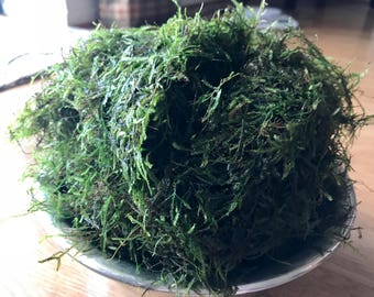 Golf Ball Portion of Java Moss