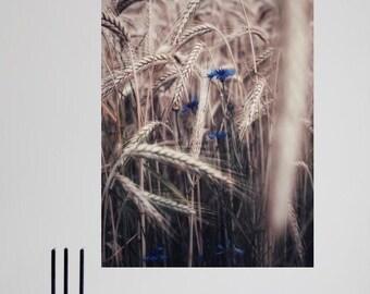 Cornfield - Fine Art digital print
