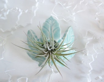Air plant planter, Cubicle decor, air plant stand, air planter, Desk decor, leaf planter,  dorm decor