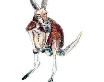Kangaroo - Collectible Print