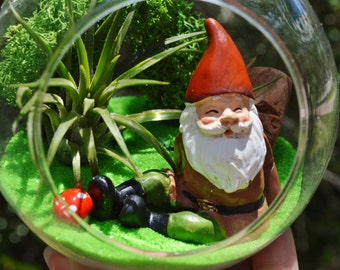 Gnome Terrarium Kit ~ Small Air Plant Terrarium Kit ~ 4 Gnomes to choose from ~ Gift Idea ~ Birthday ~ Miniature Garden ~ Fairy Garden Kit