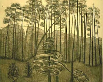 LODGE POLE PINES etching of Cook Forest