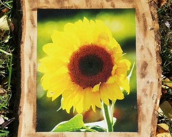 Sunflower Photo on Wood