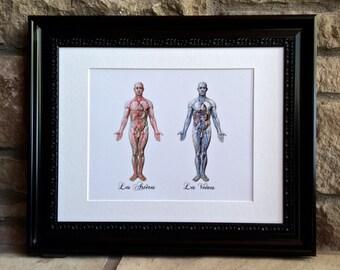 Veins & Arteries Print for Doctor, Surgeon, Vascular Surgeon, Cardiologist, Neurologist, Nurse - An Elegant Unique Medical Print