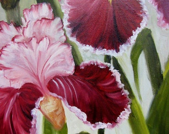 Burgandy and White Iris ,flower,floral,oils on canvas,Barbara Haviland, Texas Contemporary Artist
