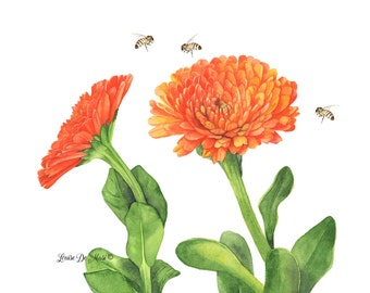 Calendula print of watercolor painting A4 sizeprint, C3216, Orange daisy print, flower watercolor painting print