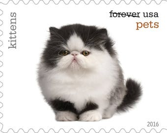 5 Unused Kitten Postage Stamps // Pet Kittens // Forever Postage Stamps for Mailing