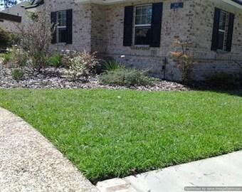 Centipede Grass Seed - Raw