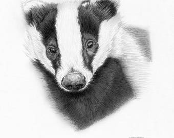 BADGER (2) Ltd Edition Woodland art drawing print signed by UK artist