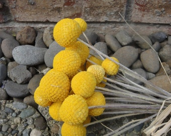 Craspedia flowers etsy quick view yellow billy balls mightylinksfo