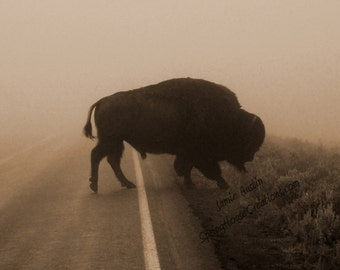Buffalo in the Mist 11x14 Fine Art Print - Sepia Bison - Yellowstone - West