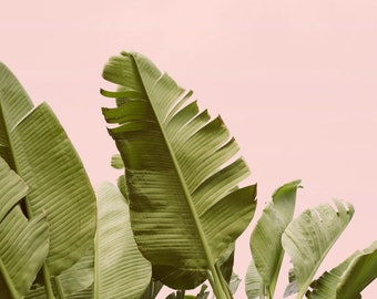 Tropical Wall Art Print, Banana Leaf Photograph, Blush Pink, Banana Leaf Print, Tropical Print, Wall Decor, Plant, Nature Photography