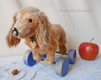Steiff Dachshund Waldi, original chest tag + collar, vintage pull toy made 1933 - 51 in this edition, old mohair dog on eccentric wheels
