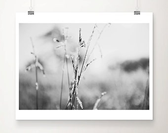 winter photograph black and white photography nature photography frost photograph grass photograph botanical print nature print