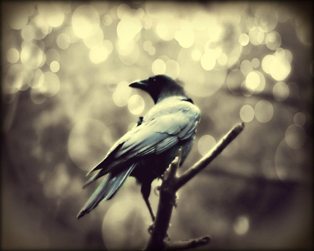 Gothic Bird Photography blackgothicamerican crowgoth